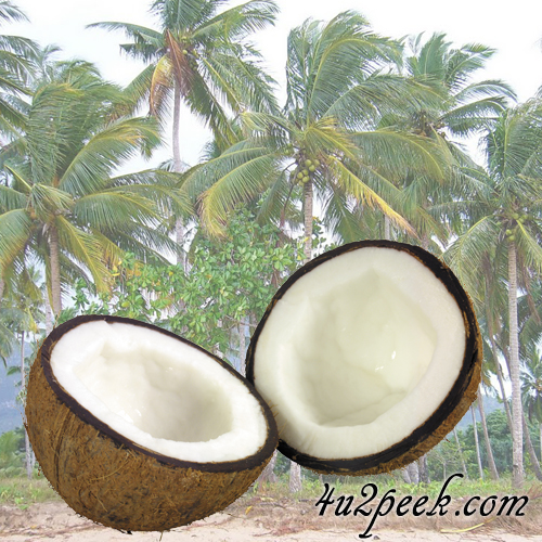 coconut oil benefits hair and skin